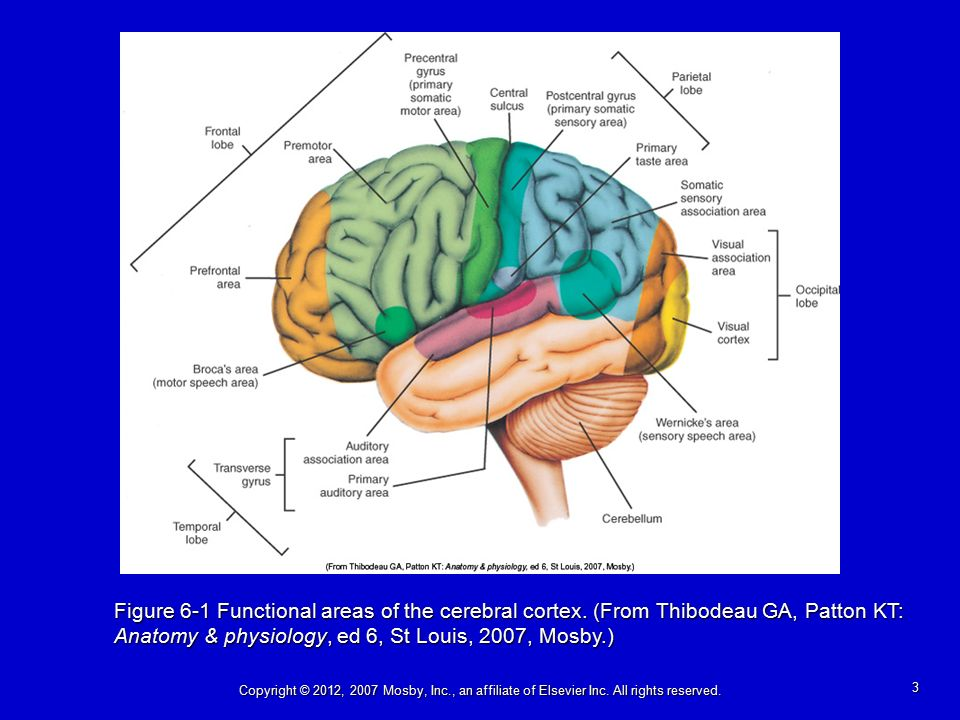 Chapter 6: Neurobiology in Mental Health and Mental Disorder ...