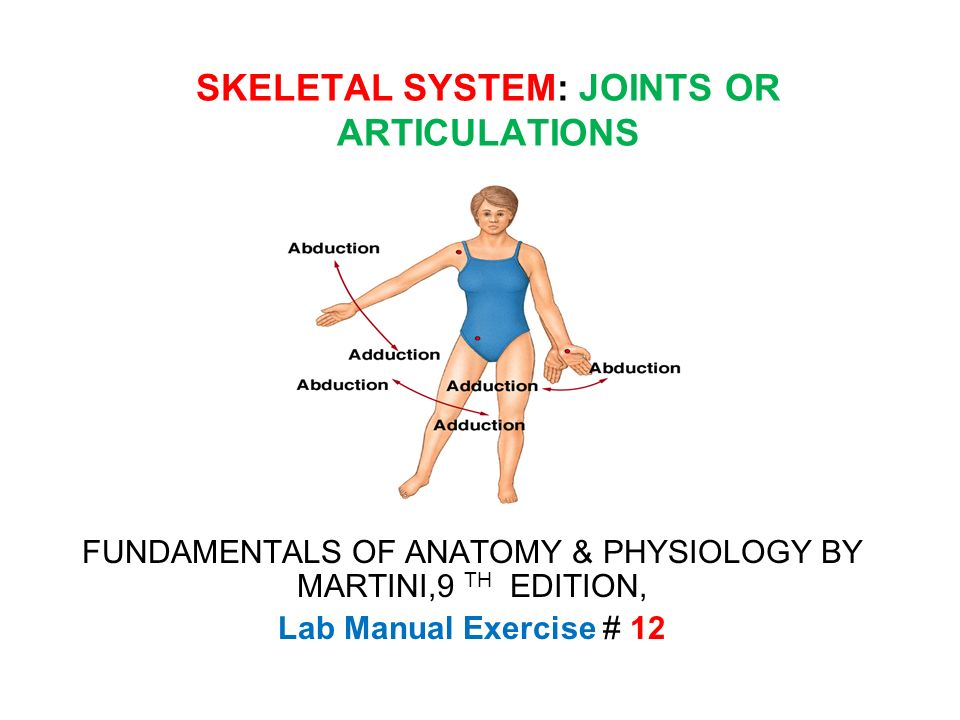 SKELETAL SYSTEM: JOINTS OR ARTICULATIONS FUNDAMENTALS OF ANATOMY ...