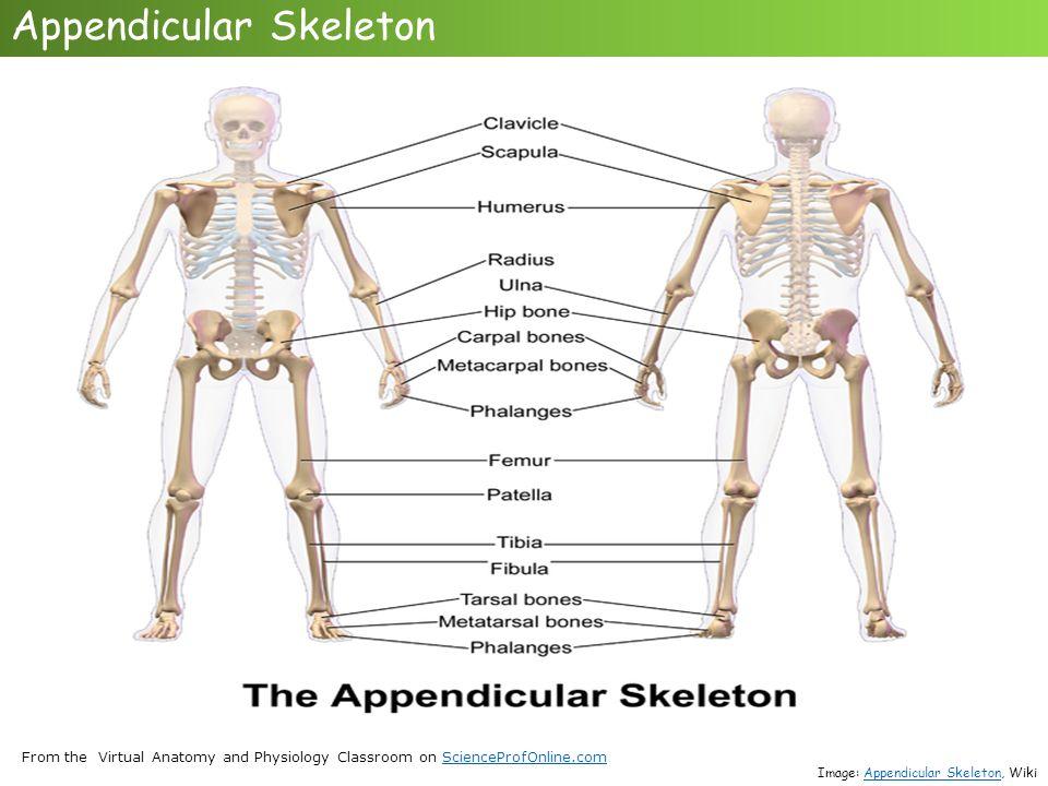Erfreut Virtual Anatomy And Physiology Bilder Anatomie Ideen
