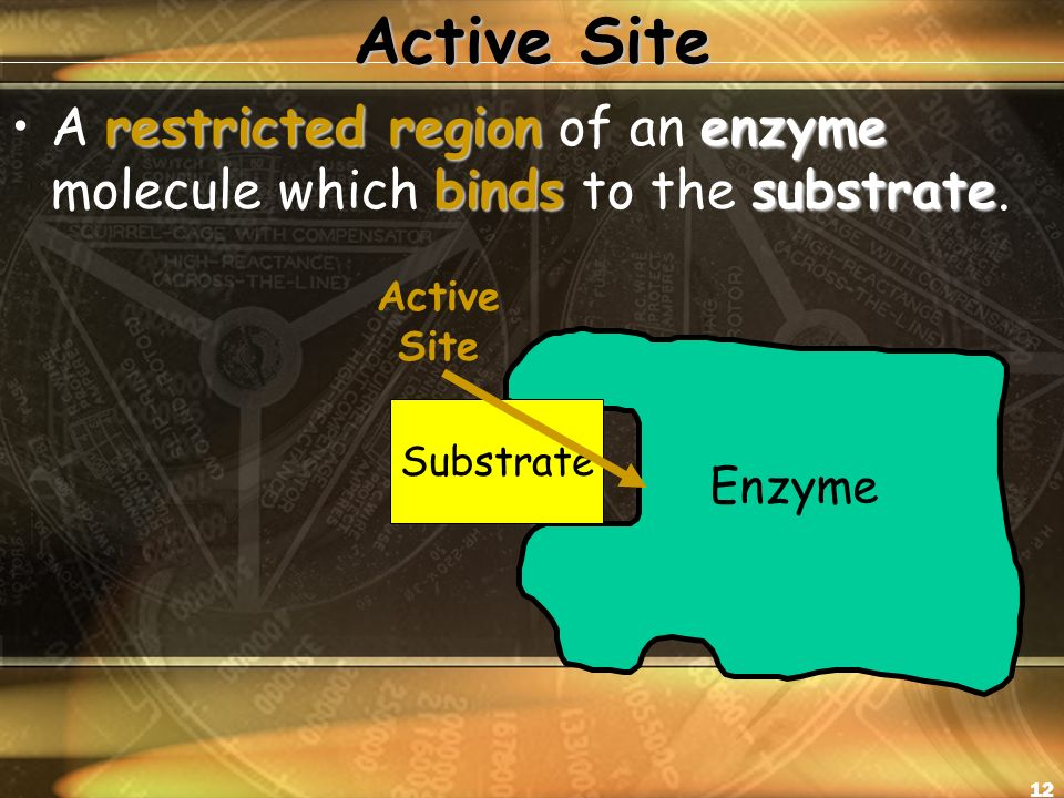 12 Active Site restricted region enzyme bindssubstrateA restricted region of an enzyme molecule which binds to the substrate.