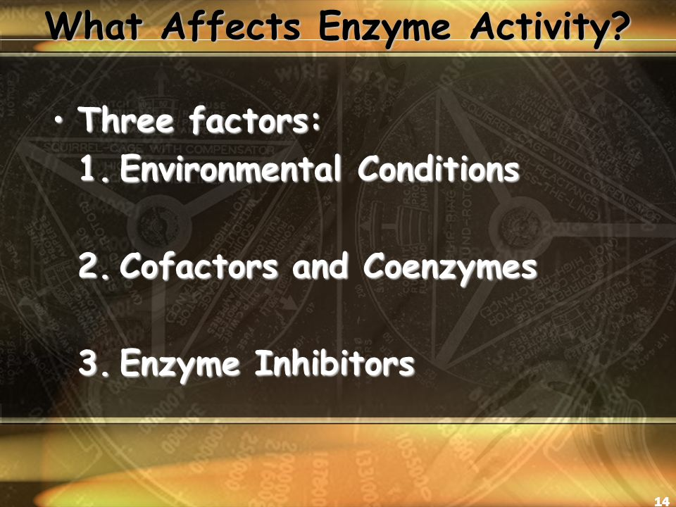 14 What Affects Enzyme Activity.