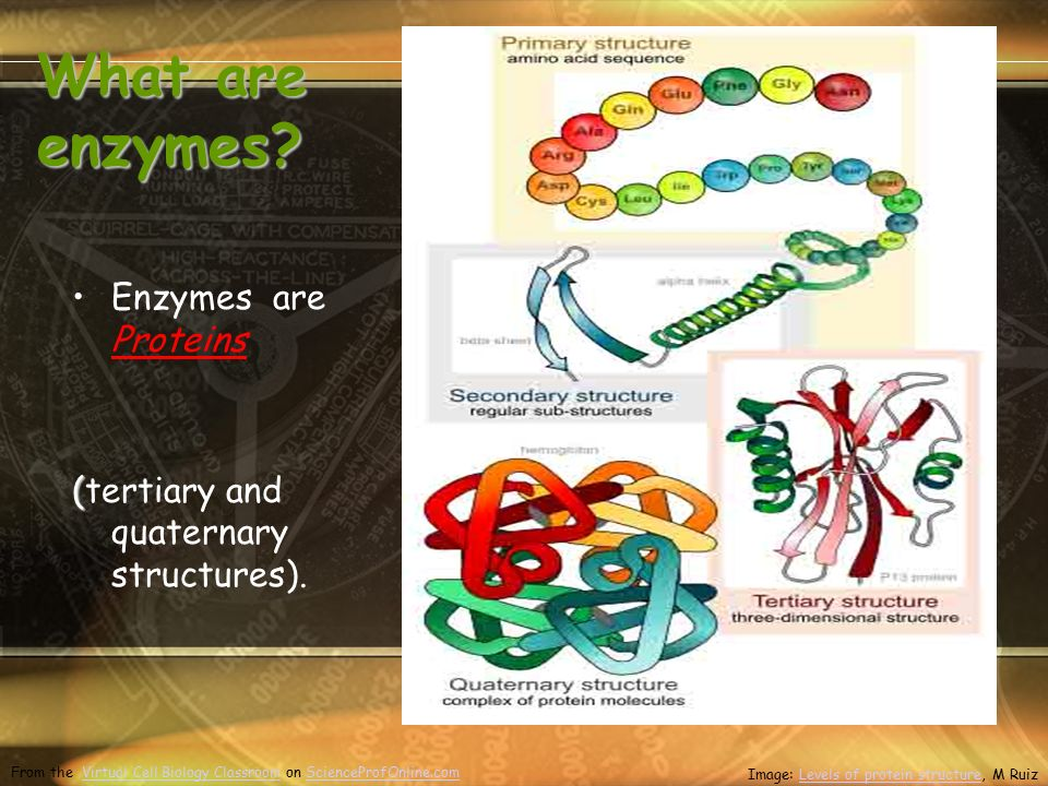 What are enzymes. Enzymes are Proteins ( (tertiary and quaternary structures).