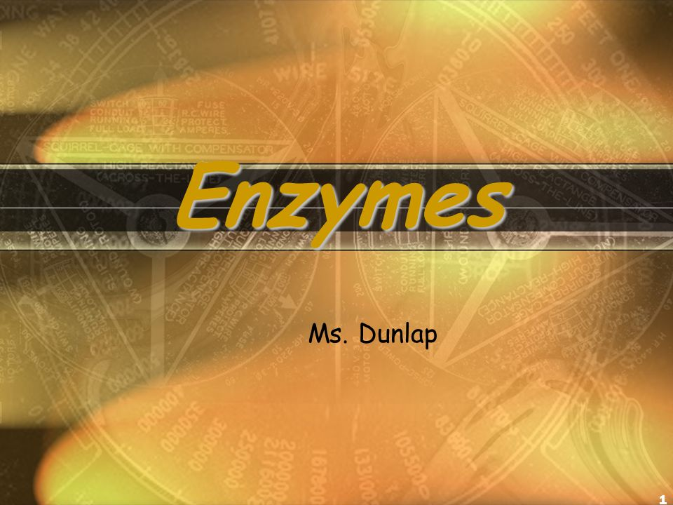 1 Enzymes Ms. Dunlap
