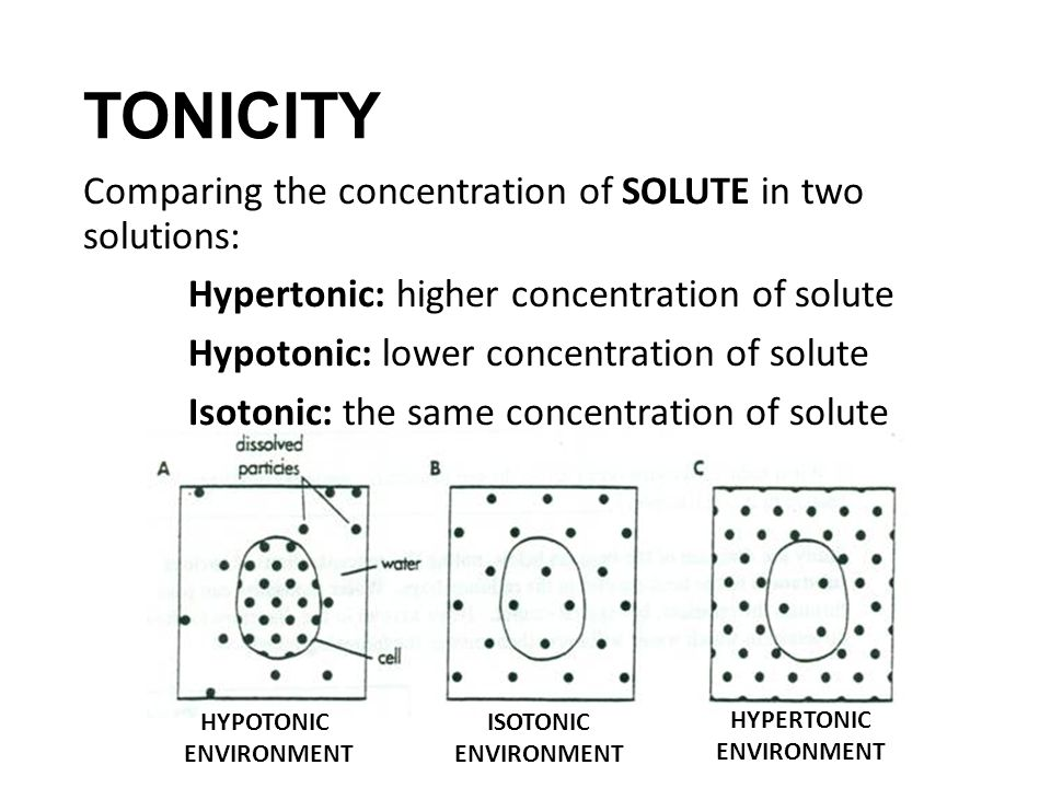 Worksheets Hypertonic Hypotonic Isotonic Worksheet do now complete the cell membrane review questions on slip tonicity comparing concentration of solute in two solutions hypertonic higher solute