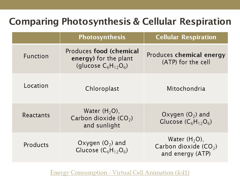 Chemical Equation For Photosynthesis And Cellular Respiration – Comparing Photosynthesis and Cellular Respiration Worksheet