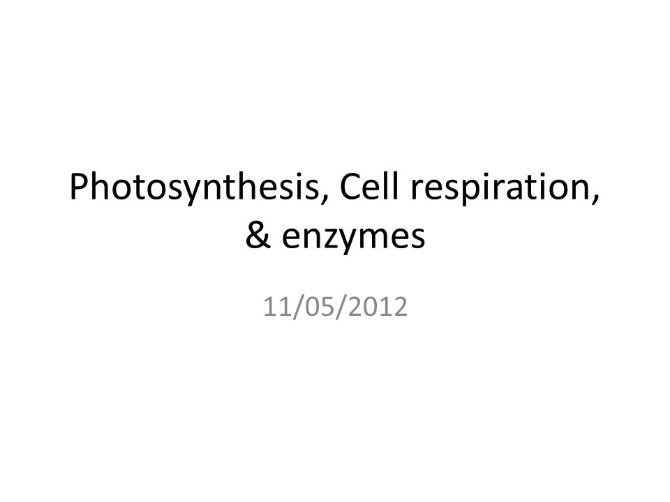 Photosynthesis, Cell respiration, & enzymes 11/05/2012