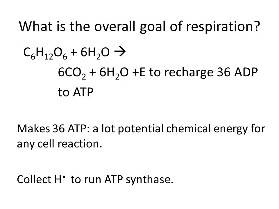 What are the 6 steps in respiration?