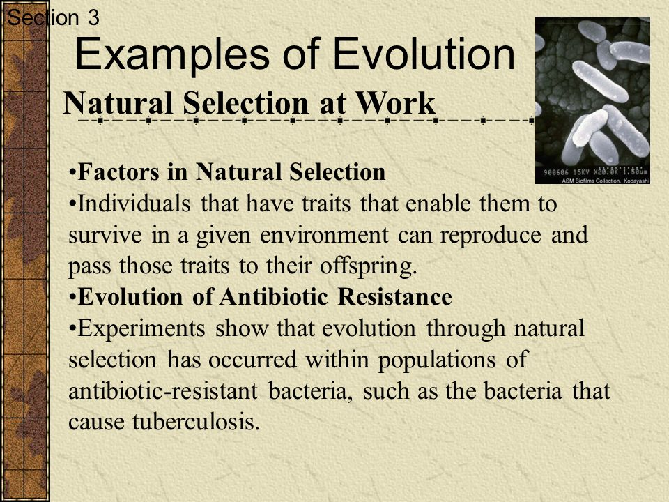 describe an example of how natural selection influenced the evolution of a particular species includ As influenced by natural selection in which evolutionary changes in one species influence the evolution of the other examples include kangaroos and.