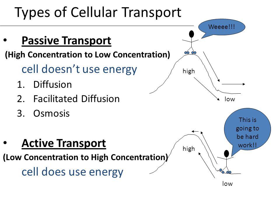 Diffusion Osmosis And Active Transport Venn Diagram Goalblockety