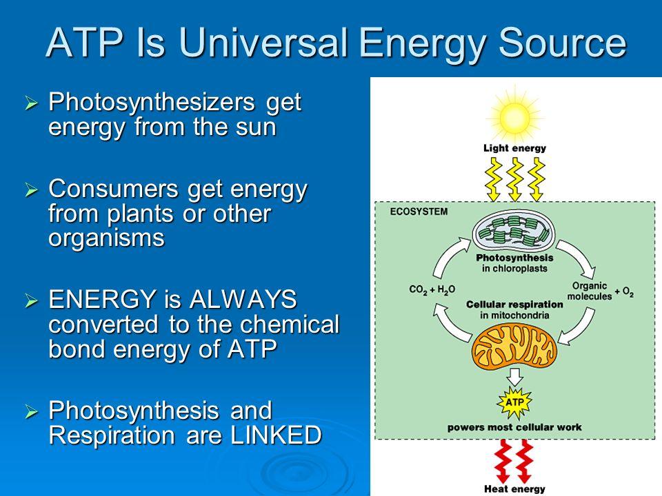 how cells harvest energy