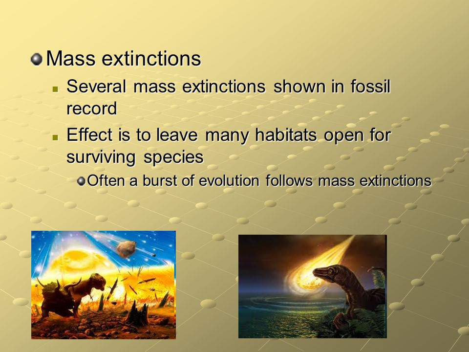 mass extinction and its effect on evolution Mass extinctions change the rules of evolution mass extinctions change the rules of evolution mass extinction fundamentally changes the dynamics.