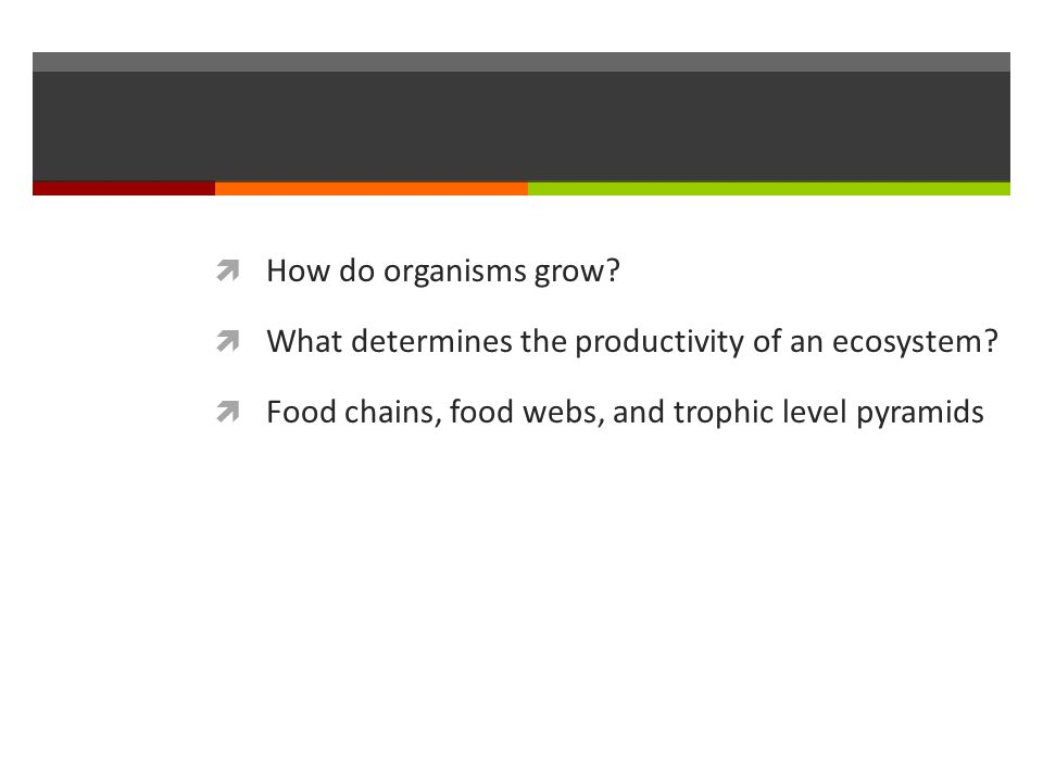  How do organisms grow.  What determines the productivity of an ecosystem.