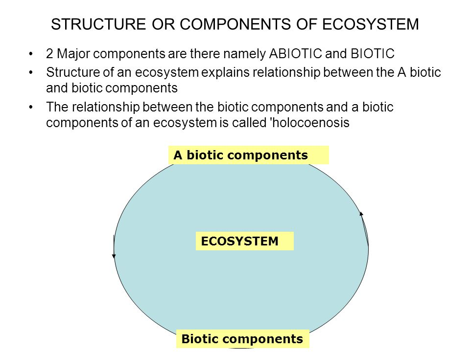 Is there a job that focuses mainly on the relationships and structure of ecosystems?