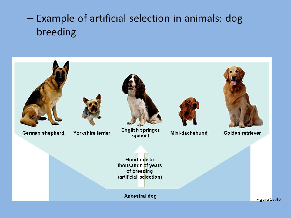 Are All Dogs One Species Socratic