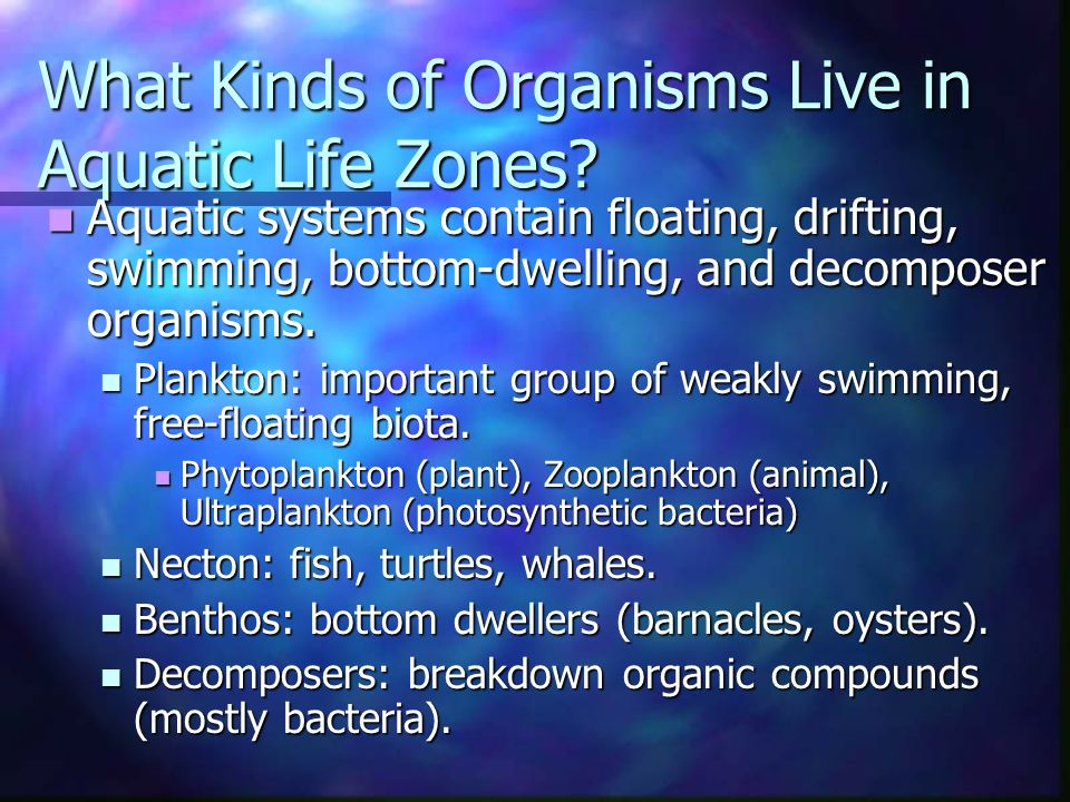 What Kinds of Organisms Live in Aquatic Life Zones.