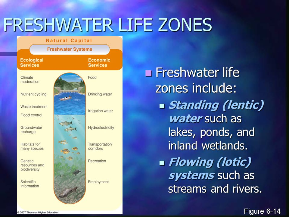 FRESHWATER LIFE ZONES Freshwater life zones include: Freshwater life zones include: Standing (lentic) water such as lakes, ponds, and inland wetlands.