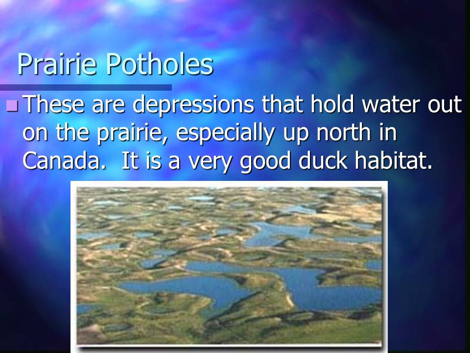 Prairie Potholes These are depressions that hold water out on the prairie, especially up north in Canada.