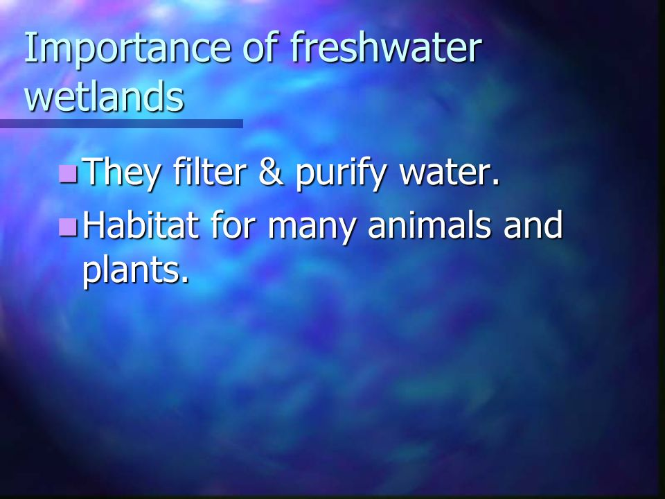 Importance of freshwater wetlands They filter & purify water.