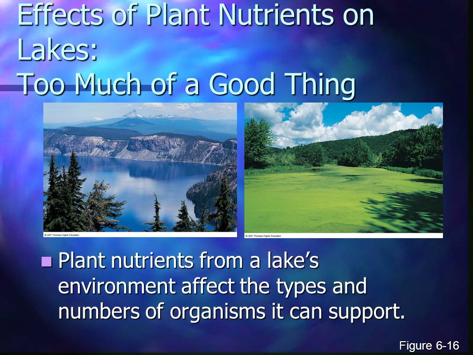 Effects of Plant Nutrients on Lakes: Too Much of a Good Thing Plant nutrients from a lake's environment affect the types and numbers of organisms it can support.
