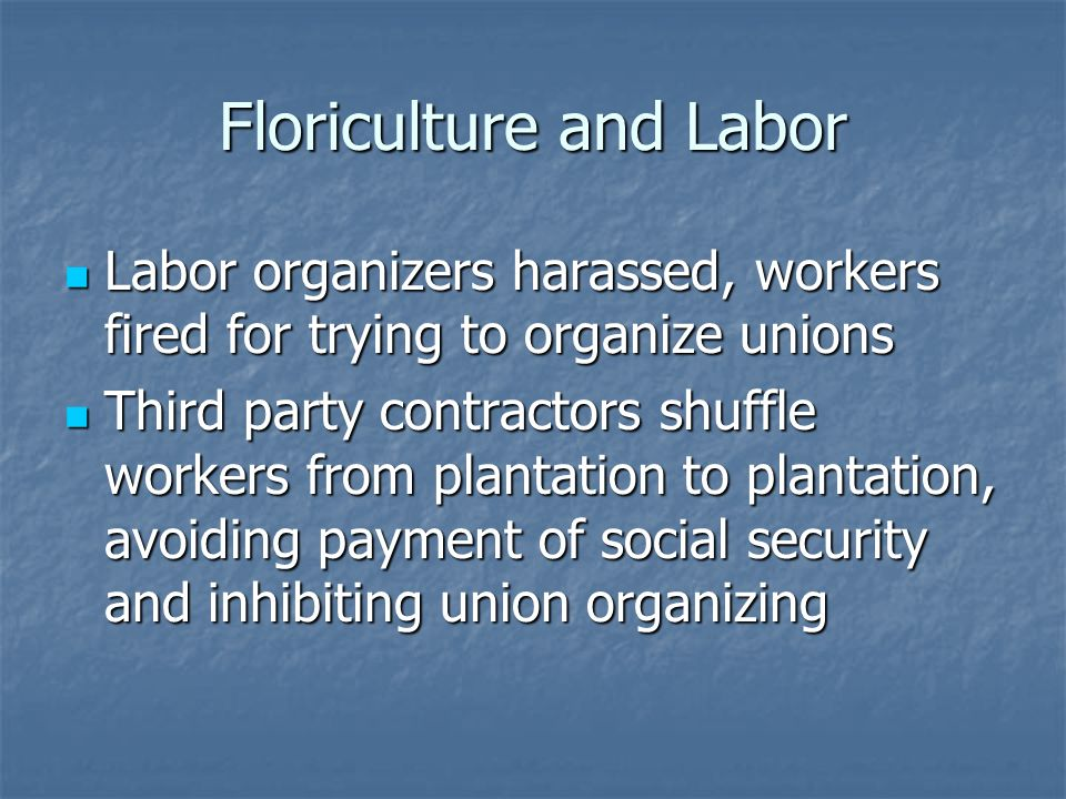 Floriculture and Labor Labor organizers harassed, workers fired for trying to organize unions Labor organizers harassed, workers fired for trying to organize unions Third party contractors shuffle workers from plantation to plantation, avoiding payment of social security and inhibiting union organizing Third party contractors shuffle workers from plantation to plantation, avoiding payment of social security and inhibiting union organizing