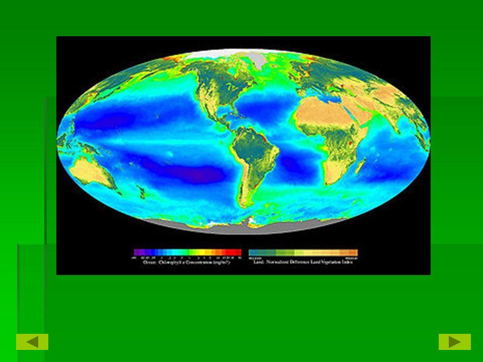 Ecology 1.1 E Living Earth. Living Earth   The part of Earth ...