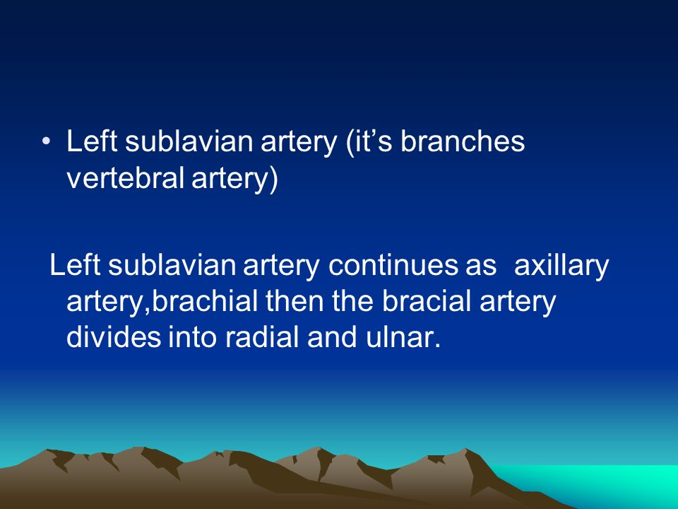 Left sublavian artery (it's branches vertebral artery) Left sublavian artery continues as axillary artery,brachial then the bracial artery divides into radial and ulnar.
