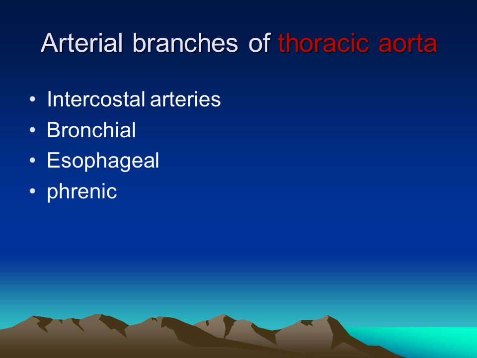 Arterial branches of thoracic aorta Intercostal arteries Bronchial Esophageal phrenic