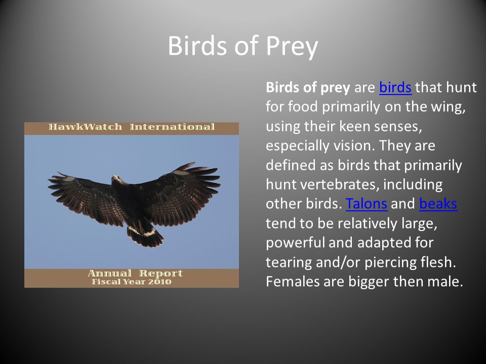 birds of prey essay Raptors are birds of prey, like eagles, hawks and falcons their toes are sharp, powerful claws called talons and they use them for catching food.