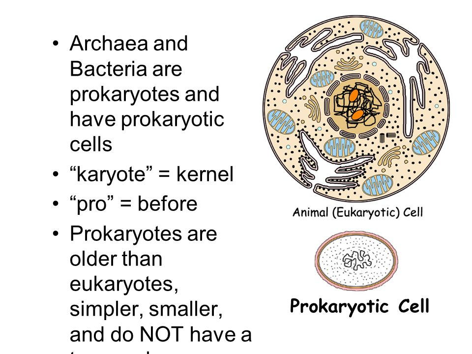 how archaea is similar to eukaryotes Archaea, bacteria, and viruses prokaryotes, viruses, and the study of plants membrane lipids are similar to those of eukaryotes.