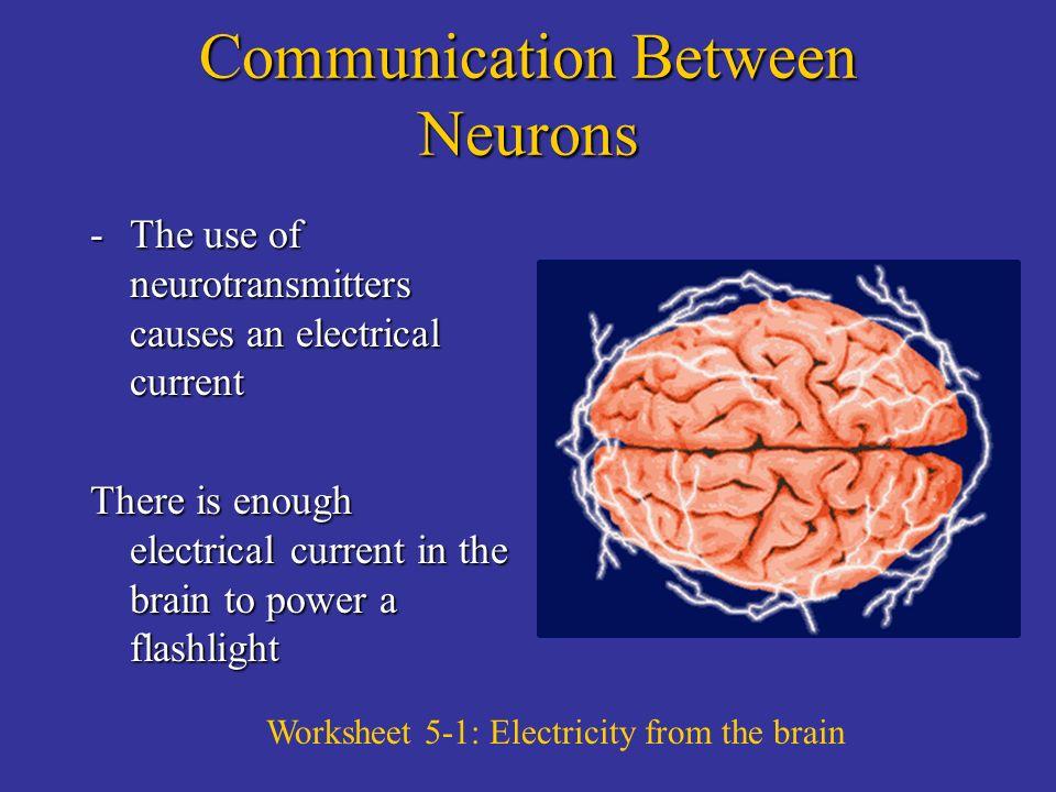 neuron worksheet