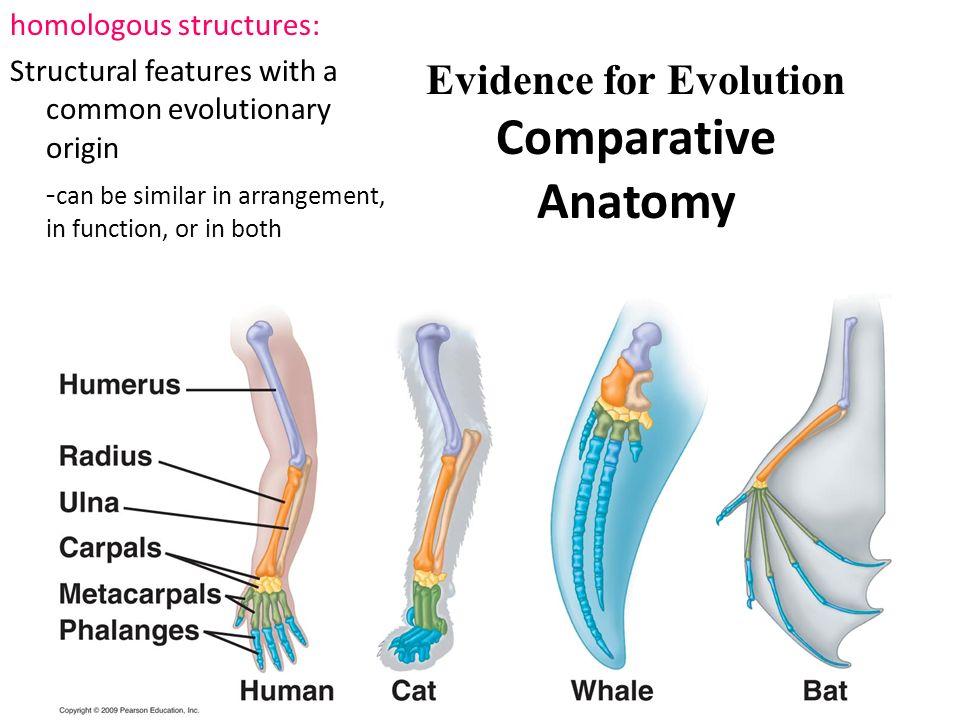 Comparative Anatomy Lab Dolphins Vs Humans Dinocrofo