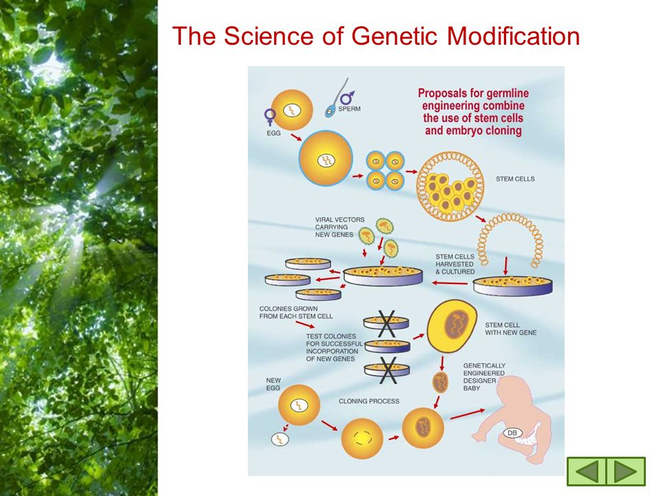 Free powerpoint templates page 1 genetic engineering ppt download 4 free powerpoint templates page 4 the science of genetic modification toneelgroepblik Choice Image