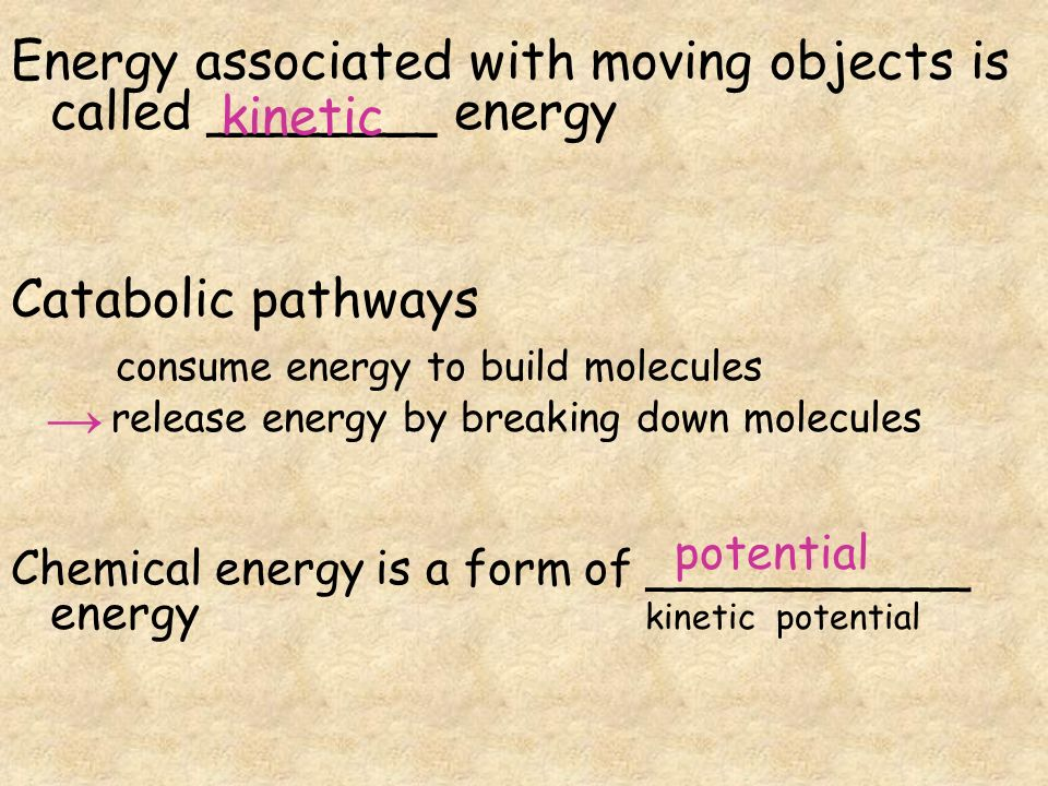AP BIOLOGY Chapter 8 Metabolism. The _____ Law of Thermodynamics ...