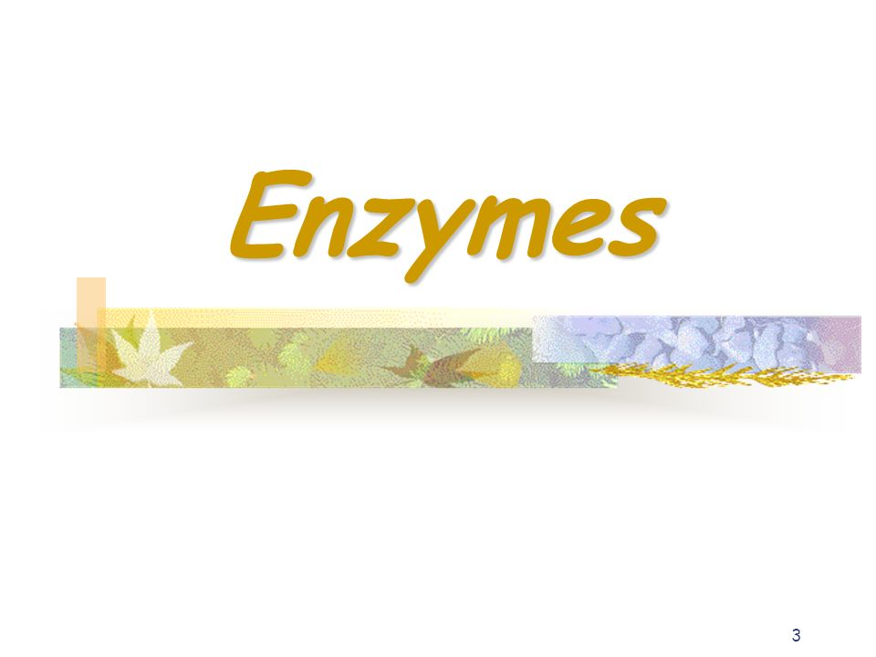 3 Enzymes