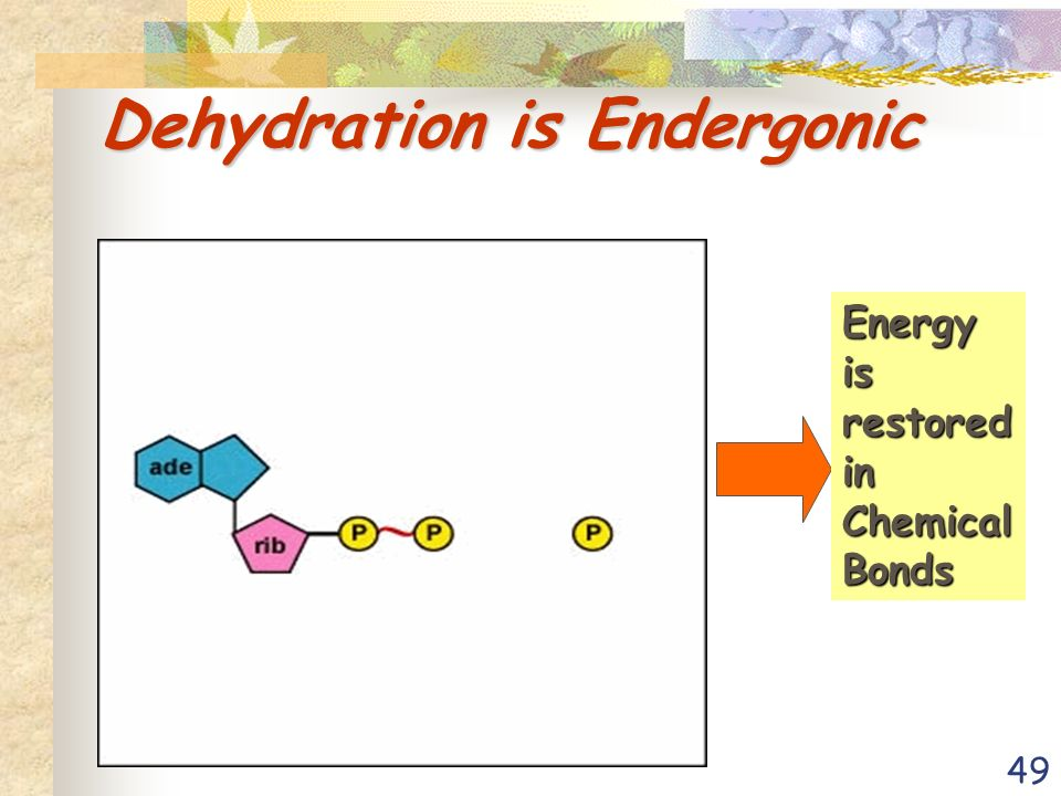 49 Dehydration is Endergonic Energy is restored in Chemical Bonds