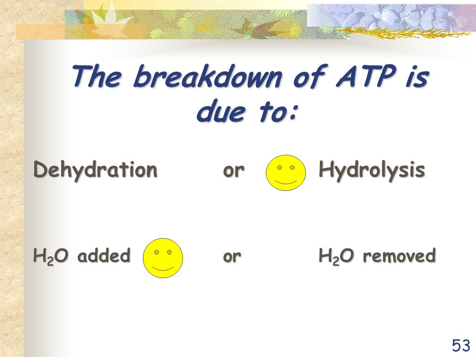 53 The breakdown of ATP is due to: DehydrationorHydrolysis H 2 O addedorH 2 O removed