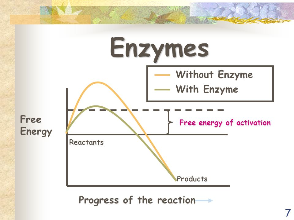7 Enzymes Free Energy Progress of the reaction Reactants Products Free energy of activation Without Enzyme With Enzyme