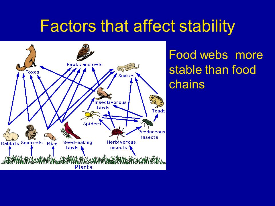 Factors that affect stability Food webs more stable than food chains