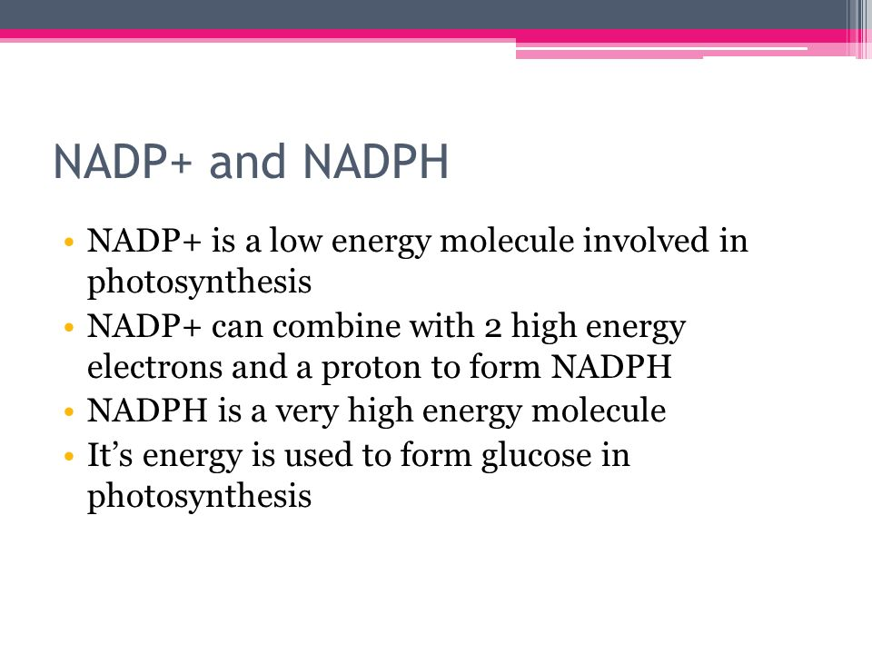 Explain the role of electron carrier molecules in photosynthesis compare contrast essay thesis