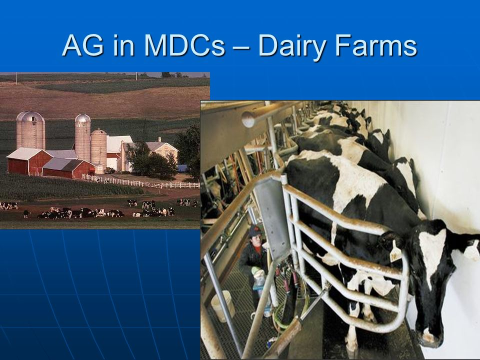 AG in MDCs – Dairy Farms
