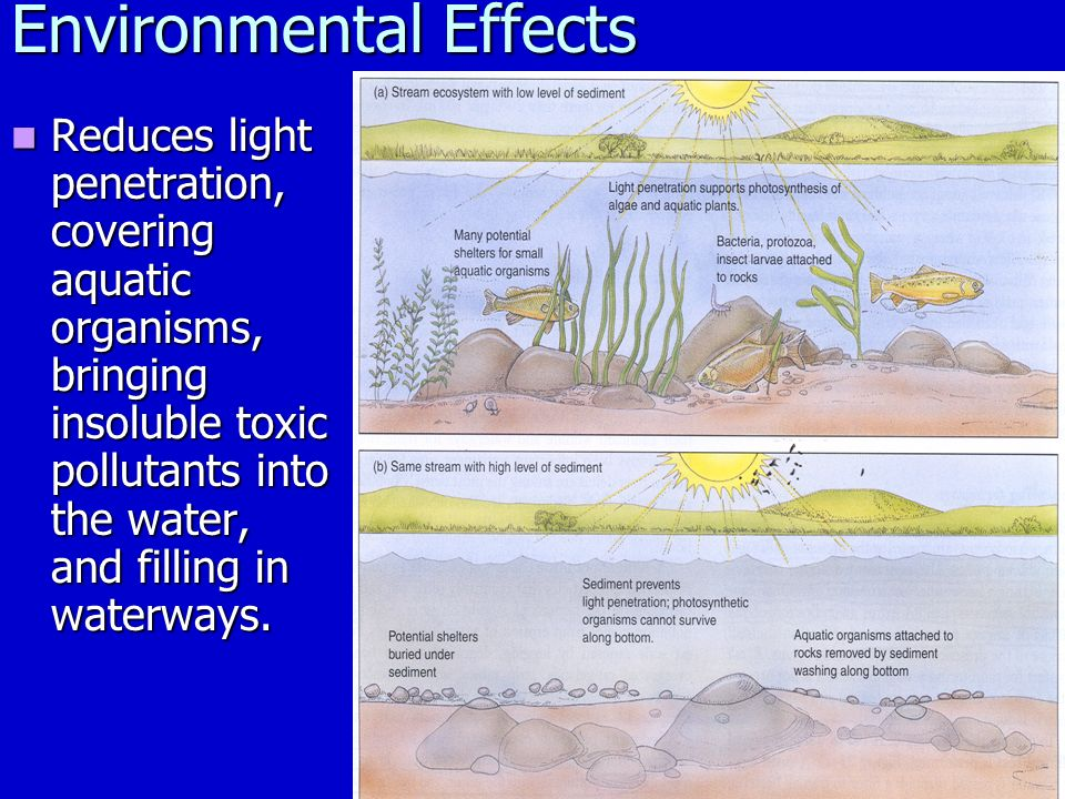 Environmental Effects Reduces light penetration, covering aquatic organisms, bringing insoluble toxic pollutants into the water, and filling in waterways.