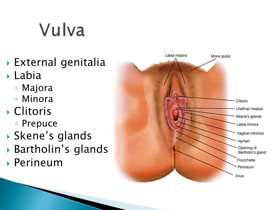 Gland sex