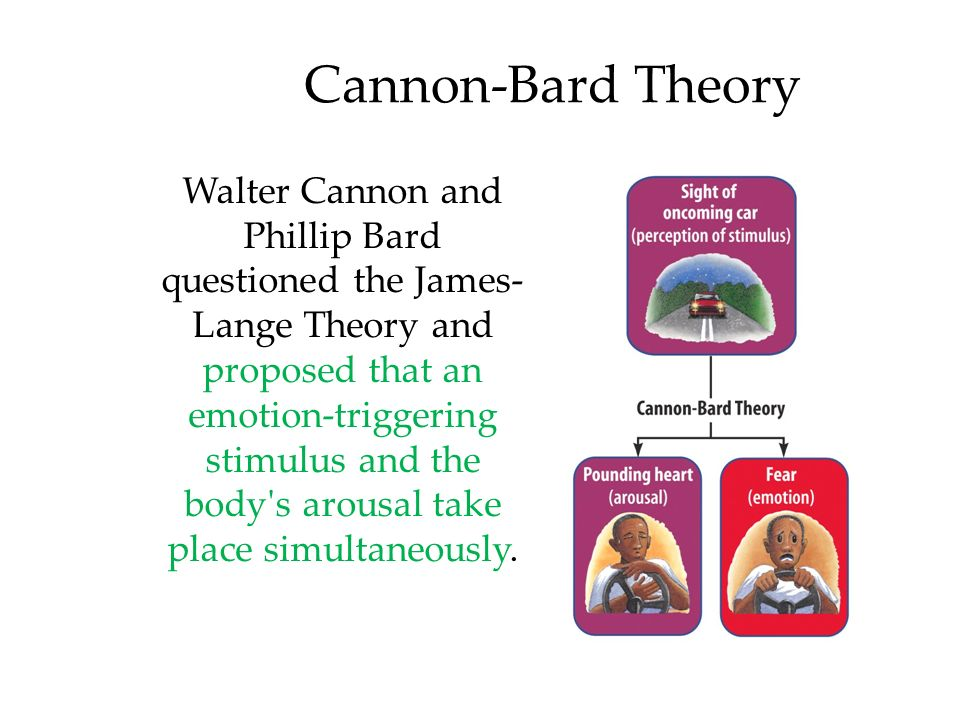 cannon theory
