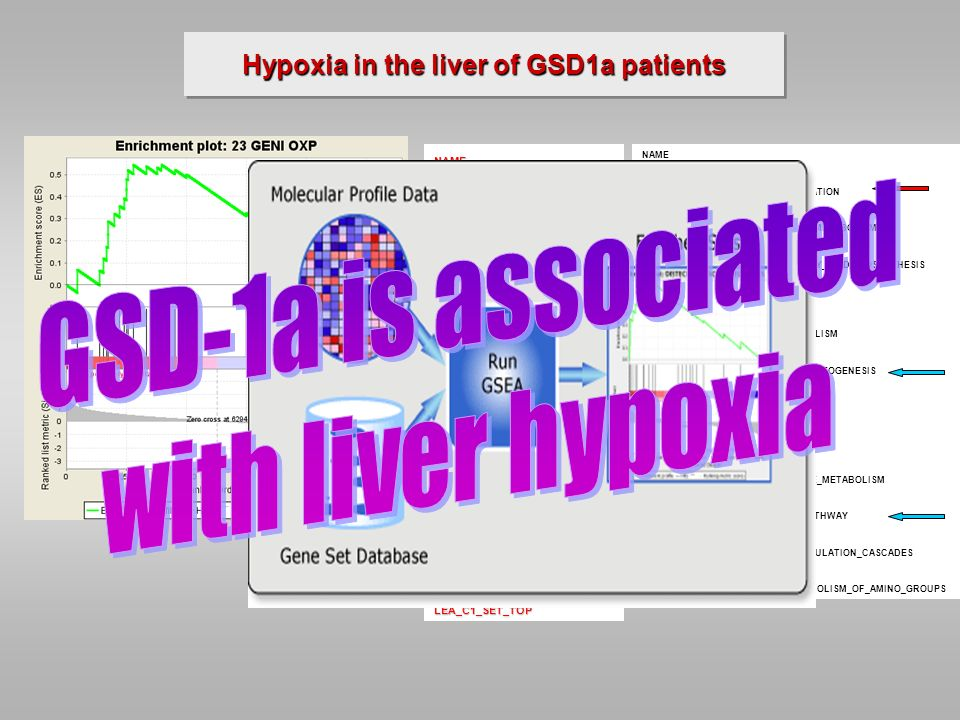 Hypoxia in the liver of GSD1a patients NAME 23 GENI OXP HYPOXIA_REG_UP LINES_MYC_LEA NB-HYPO_32 GENES L1L2_11PBST HYPOXIA_RCC_NOVHL_UP L1L2_M- V$HIF1_