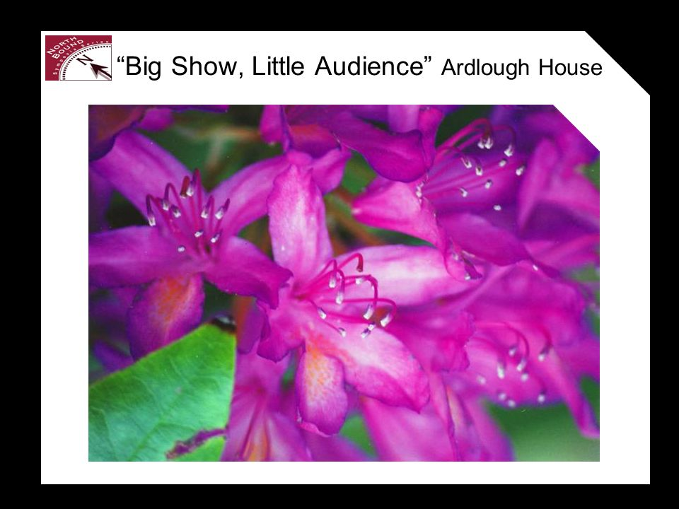 Big Show, Little Audience Ardlough House