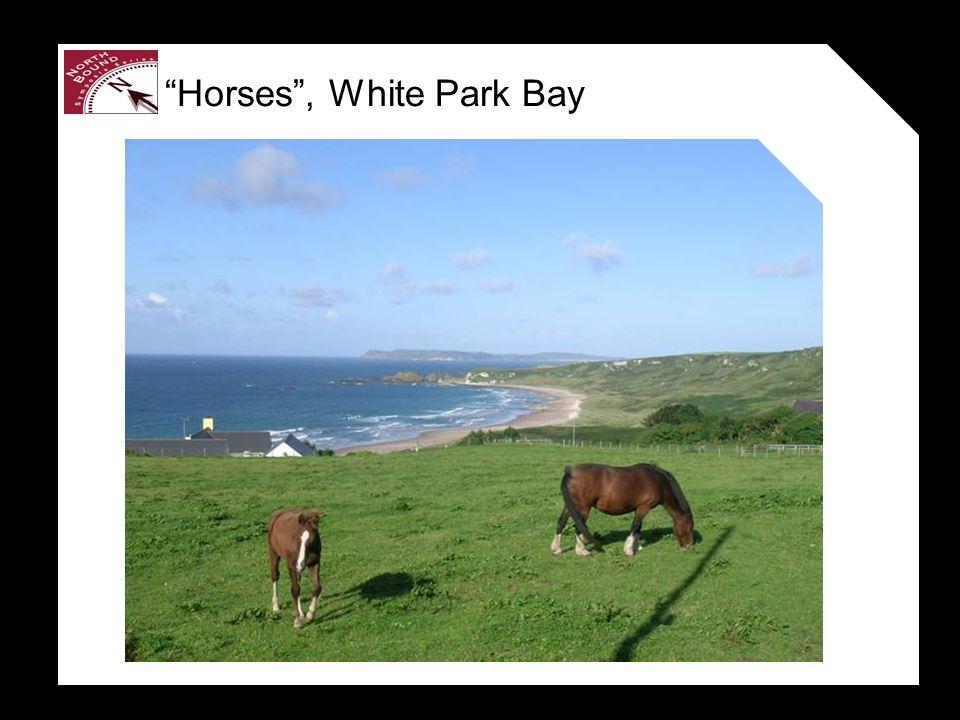 Horses, White Park Bay