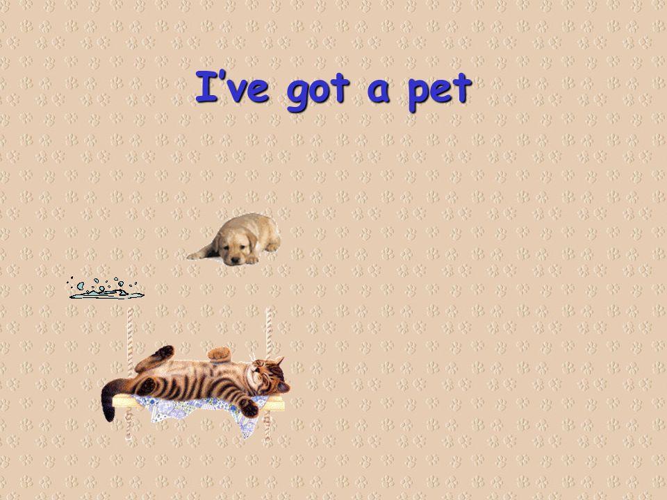 Ive got a pet