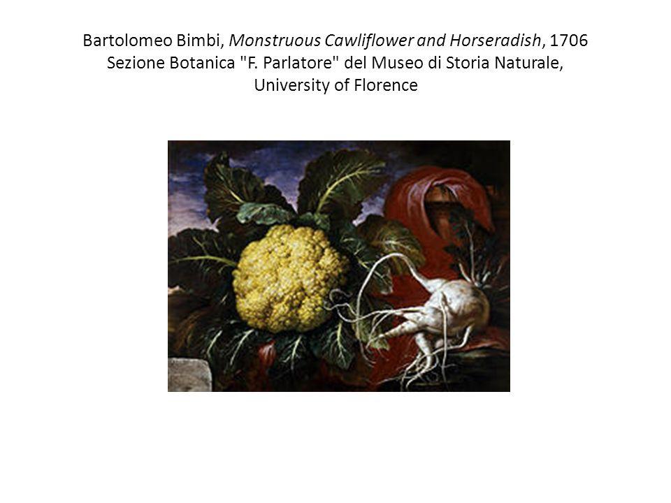 Bartolomeo Bimbi, Monstruous Cawliflower and Horseradish, 1706 Sezione Botanica