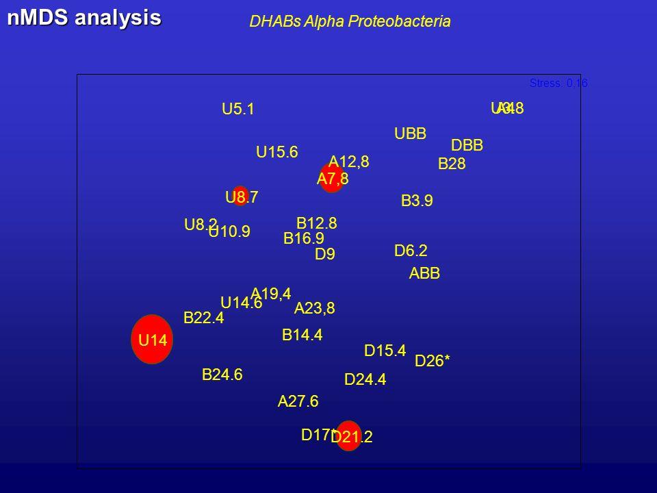 DHABs Alpha Proteobacteria U3.8 U5.1 U8.2 U8.7 U10.9 U14 U14.6 U15.6 UBB B3.9 B12.8 B14.4 B16.9 B22.4 B24.6 B28 D6.2 D9 D15.4 D17* D21.2 D24.4 D26* DBB A4 A7,8 A12,8 A19,4 A23,8 A27.6 ABB Stress: 0,16 nMDS analysis