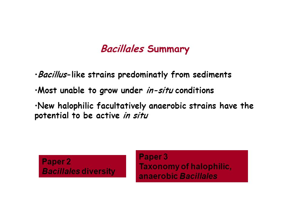 Bacillus-like strains predominatly from sediments Most unable to grow under in-situ conditions New halophilic facultatively anaerobic strains have the